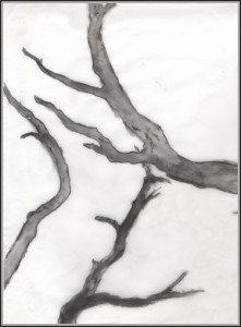 Translucent sketch branches