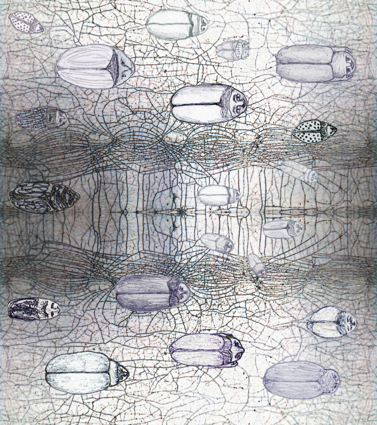Drawing of beetles on pattern